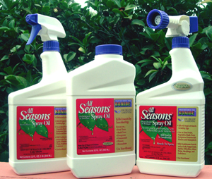 Horticultural Oil Smothers Snow Scale